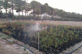 اتصالات آبیاری بارانی